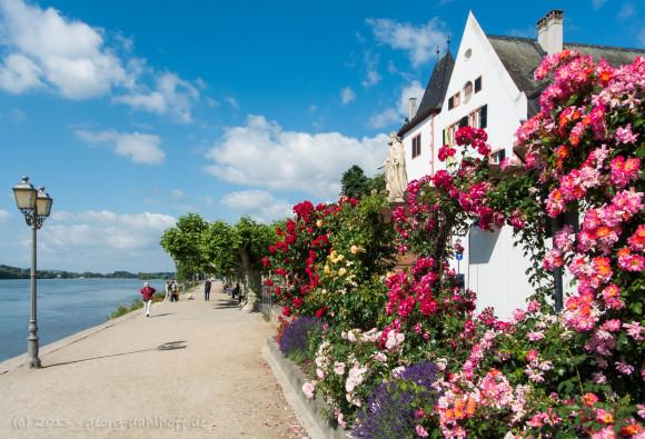 Rosen an der Rheinuferpromenade - Bild Nr. 201306301462
