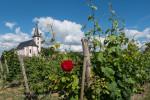 Im Weinberg bei Hochheim am Main - Bild Nr. 201406150759