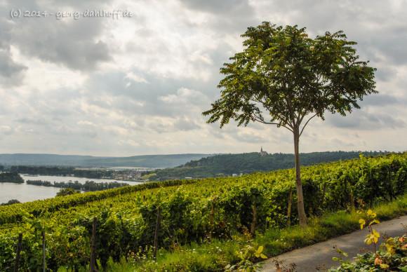 Blick auf den Rhein und die Binger St. Rochuskapelle - Bild Nr. 201408173461