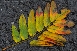 Herbst auf nassem Asphalt (1) - Bild Nr. 201409213759