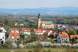 Nackenheim - Pfarrkirche St. Gereon - Bild Nr. 201504192244