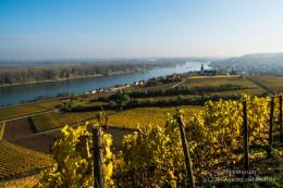 Nierstein am Rhein - Bild Nr. 201511053489