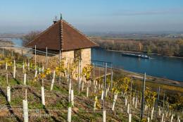Weinbergshäuschen hoch über dem Rhein - Bild Nr. 201511053504