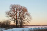 Winter am Niederrhein - Bild Nr. 200901062248