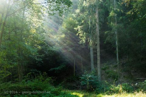 Die Sonne durchbricht den Nebel - Bild Nr. 201610165324